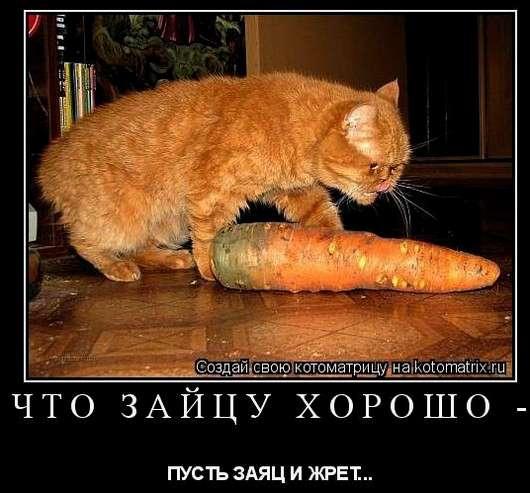 кот и морковь