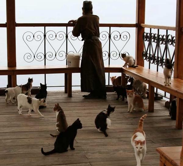кошки в манастыре