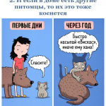 03картинки-с-кошками