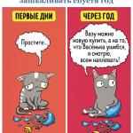 07картинки-с-кошками