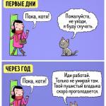 08картинки-с-кошками