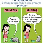 09картинки-с-кошками