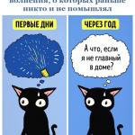 10картинки-с-кошками