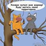 13картинки-с-кошками