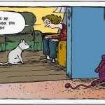 42картинки-с-кошками