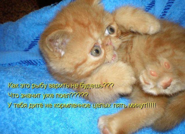 Картинки про кошек и котят с прикольными надписями, месяцами мальчика