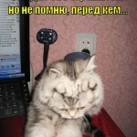 tn_котику стыдно