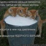 tn_котята и молоко