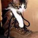 tn_котёнок в ботинке