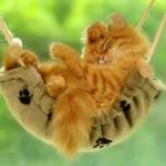 tn_котёнок в гамаке
