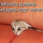 tn_котёнок в диване