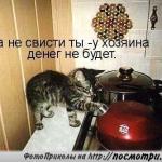 tn_котёнок и чайник