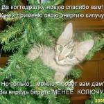 tn_котёнок на ёлке