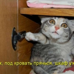 tn_котёнок под кроватью