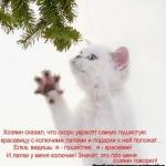 tn_котёнок 1