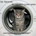 tn_кот в стиралке