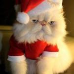 tn_кот дед мороз
