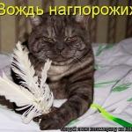 tn_кот индеец