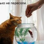 tn_кот и аквариум