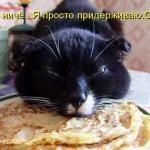 tn_кот и блины