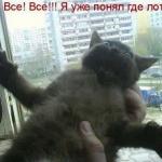 tn_кот и всё