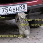 tn_кот и номера