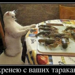 tn_кот и раки