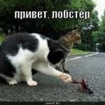 tn_кот и рак