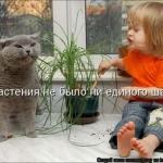 tn_кот и ребёнок 1