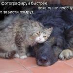 tn_кот и собака