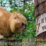 tn_кот и столб