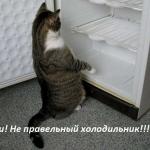 tn_кот и холодильник