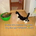 tn_кот и щука