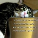 tn_кот мечтает (2)