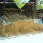 tn_кот на газетах