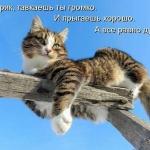 tn_кот на заборе