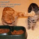 tn_кот не подпускает другого к миске