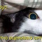 tn_кот прячется