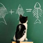 tn_кот решает задачу