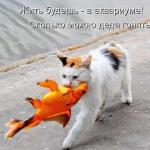 tn_кот с золотой рыбкой