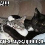 tn_кот с кошкой