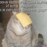 tn_кот с сыром