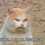 tn_кот хулиган