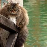 tn_мощный кот