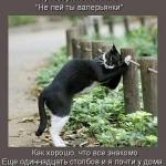 tn_пьяный кот