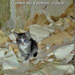 tn_1377456205_prikoly-2679