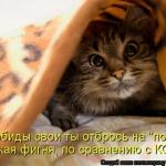 tn_1392896064_kotomatricy-6