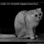 tn_604196