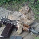 кот ввшник