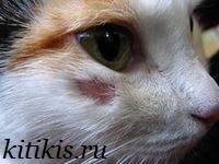 лишай у кота под глазом